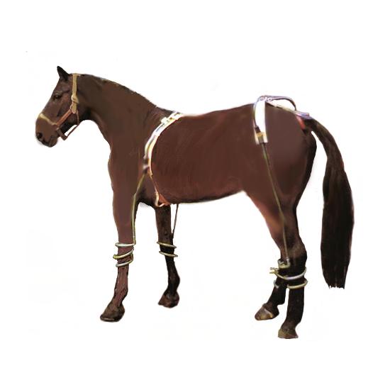 Ein zufriedenes Pferd mit WATER~FIT